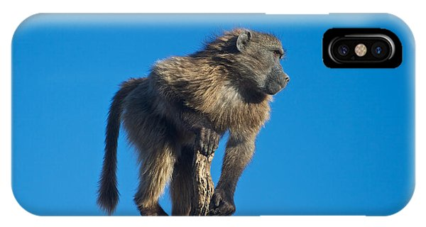 Sentry Baboon Namibia IPhone Case