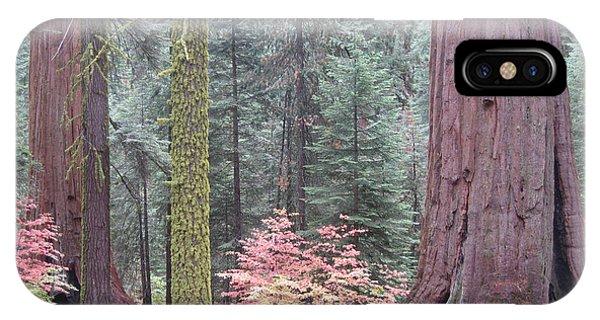 Sierra Nevada iPhone Case - Sequoia  Trees  by Naxart Studio