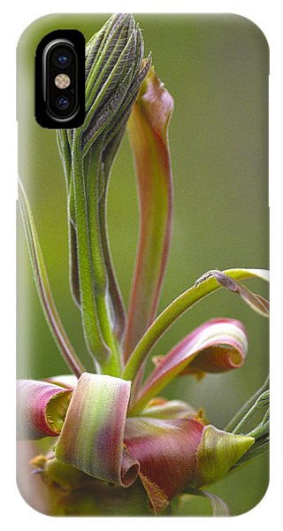 Shagbark Hickory Leaf And Flower Bud IPhone Case