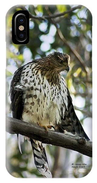 Sharp Shinned Hawk - Winged Stare -5459 IPhone Case