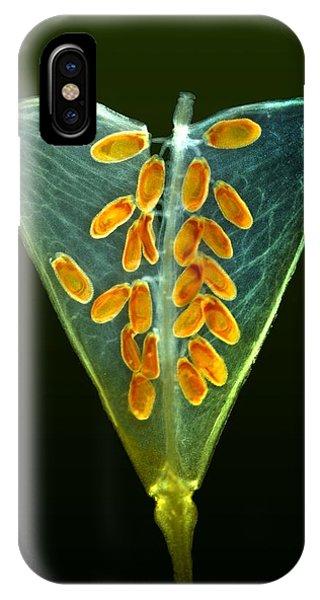 Shepherd's Purse Fruit, Light Micrograph Phone Case by Dr Keith Wheeler