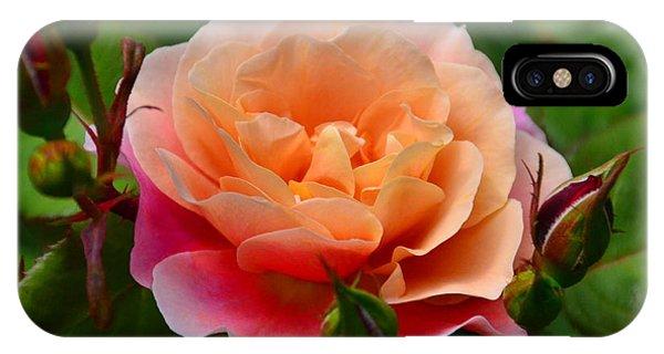 Sherbet Rose IPhone Case