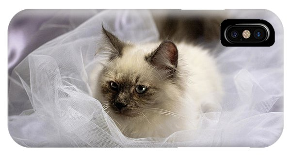 Siberian Kitty On Lilac IPhone Case