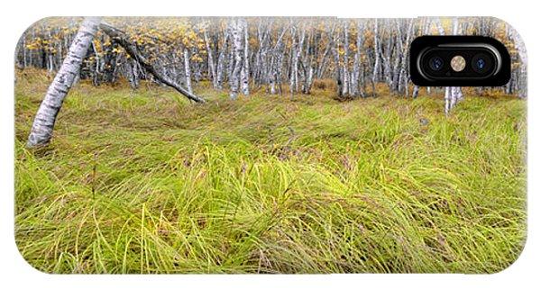 Sieur De Monts Forest - Acadia National Park IPhone Case
