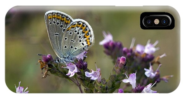 Silver-studded Blue On Marjoram Phone Case by Bob Gibbons
