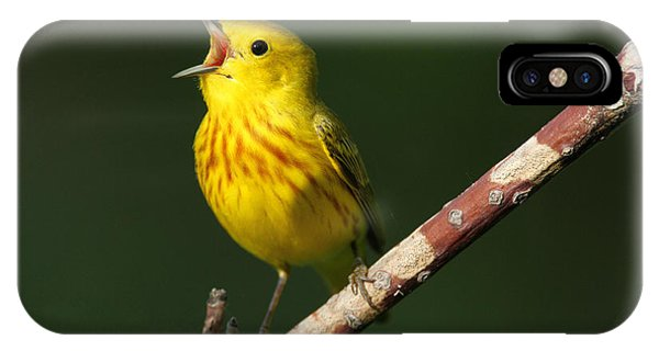 Singing Yellow Warbler IPhone Case