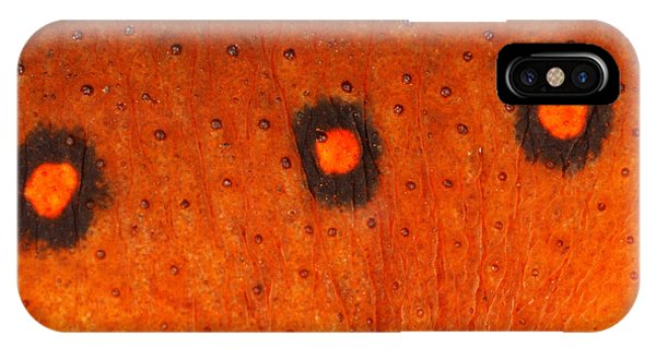 Newts iPhone Case - Skin Of Eastern Newt by Ted Kinsman