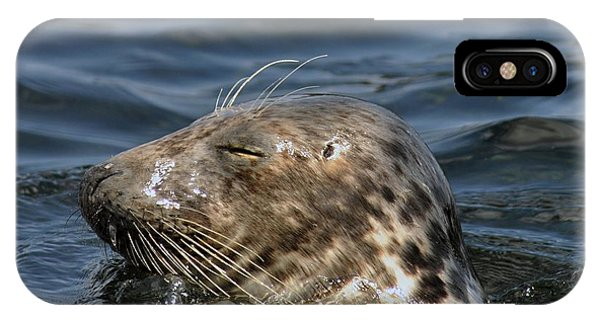 Sleepy Seal IPhone Case