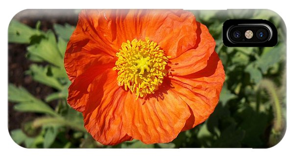 Small Orange Poppy IPhone Case