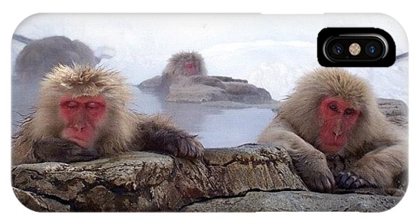Cause iPhone Case - Snow Monkeys In Jigokudani Japan by Wolf Stumpf