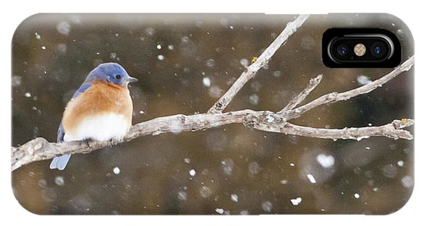 Snowy Bluebird IPhone Case