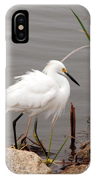 Snowy Egret IPhone Case