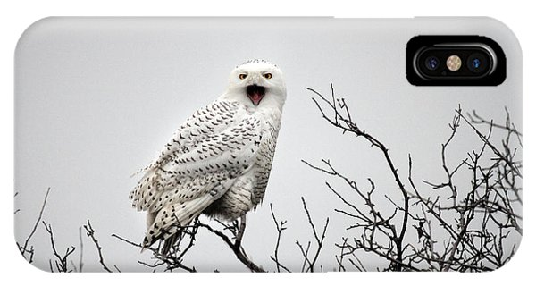 Snowy Owl In A Tree Phone Case by Pierre Leclerc Photography