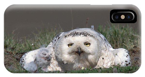 Snowy Owl Nyctea Scandiaca Mother IPhone Case