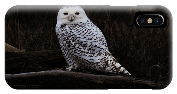 Snowy Owl Two IPhone Case