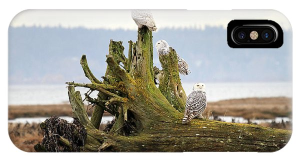 Snowy Owls Phone Case by Pierre Leclerc Photography