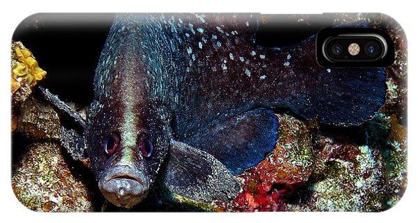 Soapfish IPhone Case