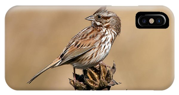 Wakulla iPhone Case - Song Sparrow by Rich Leighton