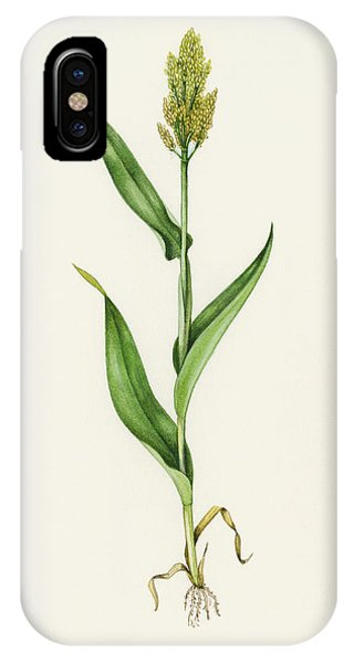 Sorghum (sorghum Bicolor), Artwork Phone Case by Lizzie Harper