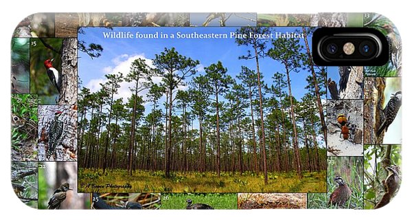 Southeastern Pine Forest Wildlife Poster IPhone Case