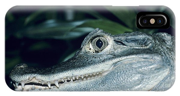 Spectacled Caiman Phone Case by David Aubrey