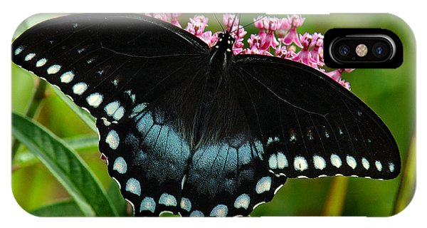 Spicebush Swallowtail Din038 IPhone Case
