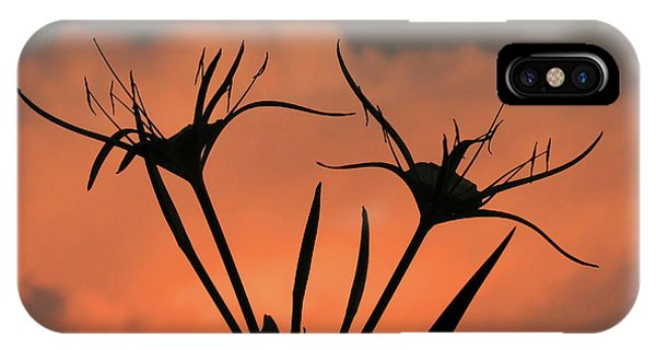 Spider Lilies At Sunset IPhone Case