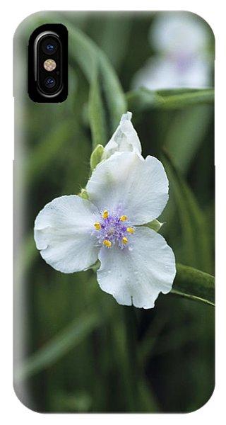 Tradescantia iPhone Case - Spiderwort by Adrian Thomas