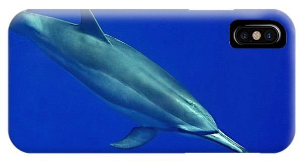 Spinner Dolphin Up Close IPhone Case
