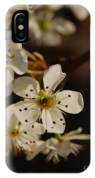 Spring Blossoms I IPhone Case
