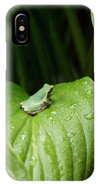 Spring Peeper IPhone Case