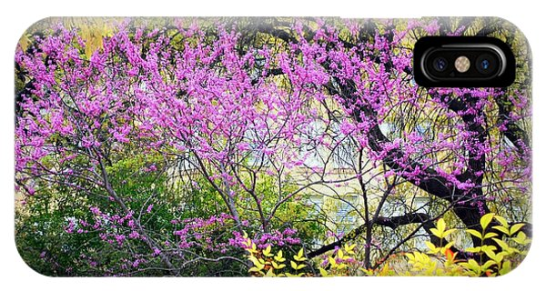 Spring Trees In San Antonio IPhone Case