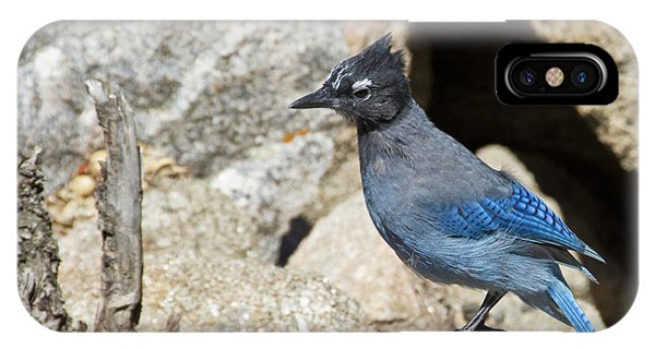 Stellers Jay IPhone Case