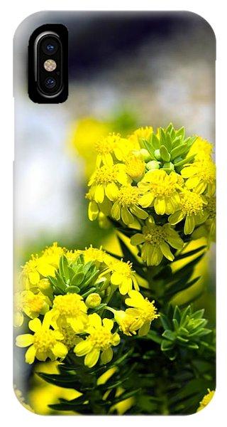 Stonecrop (sedum Middendorffianum) Phone Case by Dr Keith Wheeler