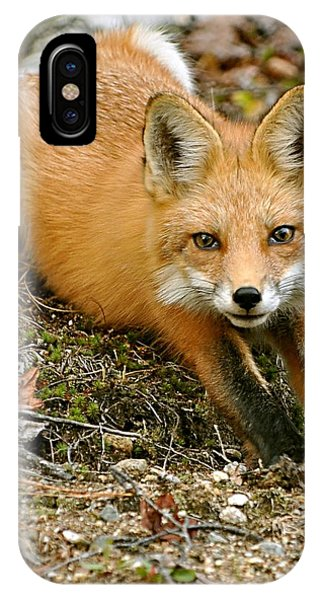 Stretching Fox IPhone Case