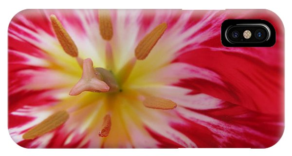 Striped Flaming Tulips. Hot Pink Rio Carnival IPhone Case