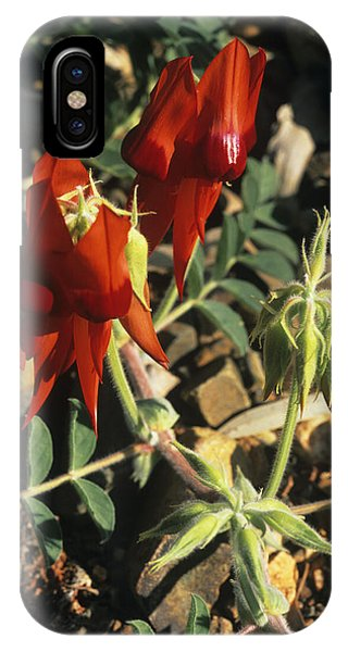 Sturt's Desert Pea Flowers Phone Case by Dirk Wiersma