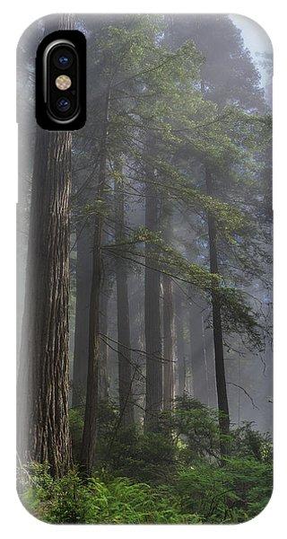 Sun Breaking On Redwoods IPhone Case