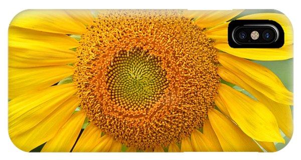 Sunflower Days IPhone Case