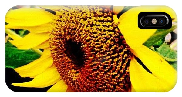 Florals iPhone Case - #sunflower #flower #sun #yellow #green by Katie Williams