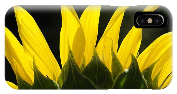 Sunflower Greeting The Morning IPhone Case