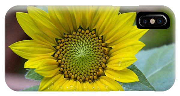 Sunflower Number 2 IPhone Case