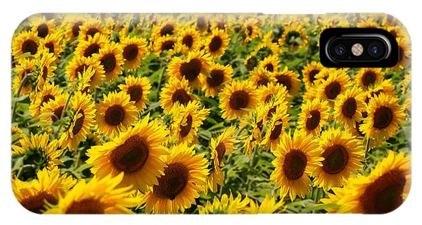 Sunflower Panorama IPhone Case