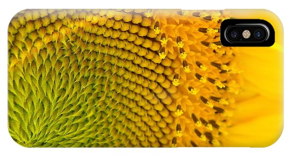 Sunflower Study 1 IPhone Case