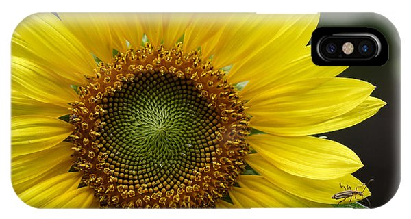 Sunflower With Insect IPhone Case