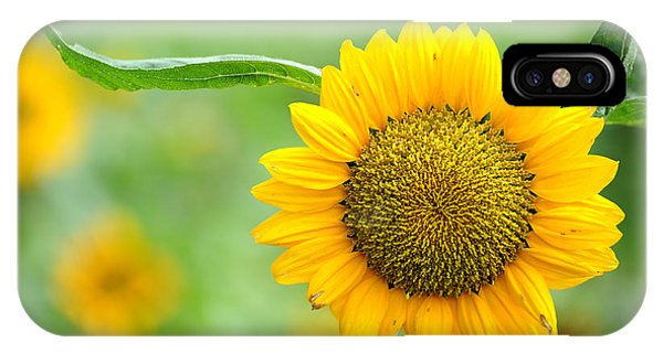 IPhone Case featuring the photograph Sunflower by Yew Kwang