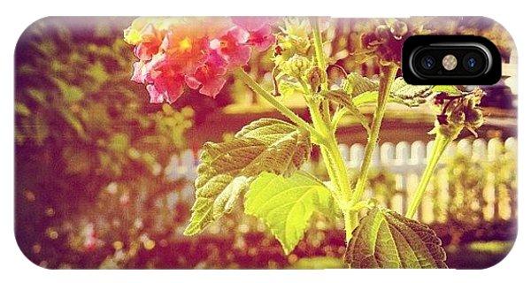 Beautiful iPhone Case - #sunlight #beautiful #flower by Cortney Herron