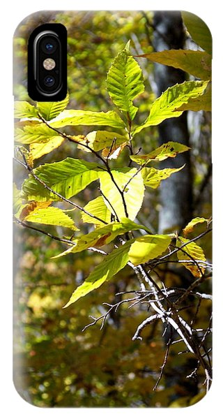 Sunlight On Leaves IPhone Case