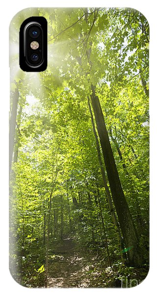 Hiking Path iPhone Case - Sunny Forest Path by Elena Elisseeva