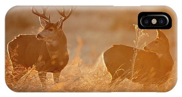 Sunrise Mule Deer IPhone Case